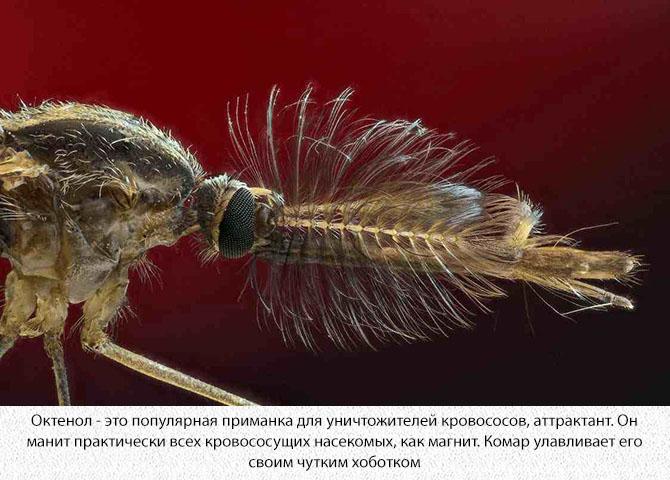 Нос комара