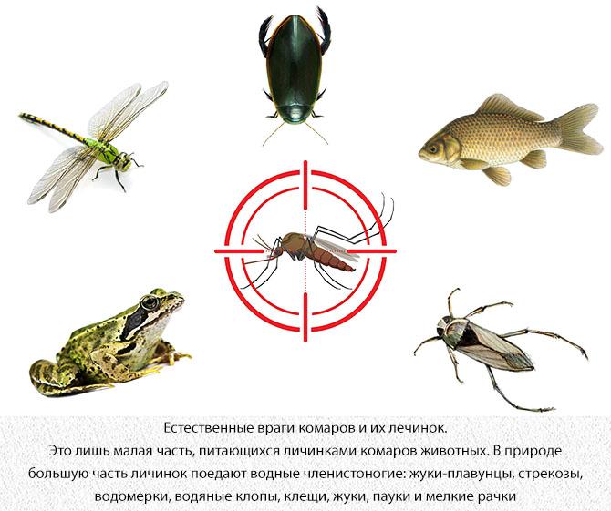 Естественные враги комаров и их лечинок