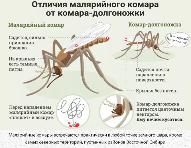 Отличия малярийного комара от комара долгоножки