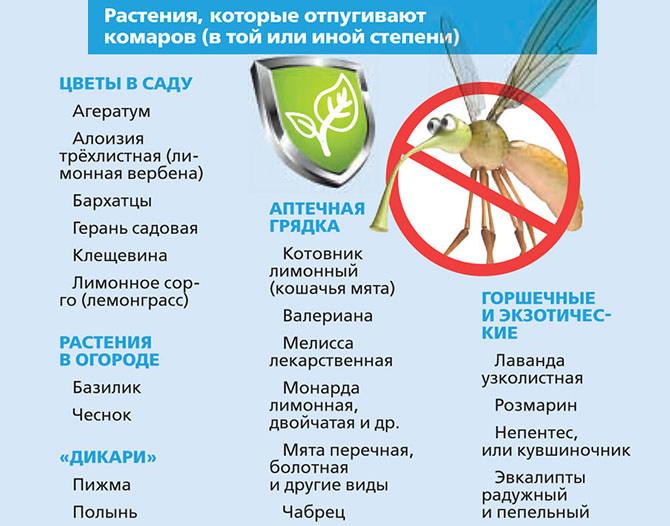 Растения которые отпугивают комаров