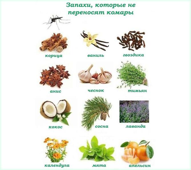 Растения, запахи которых не переносят комары