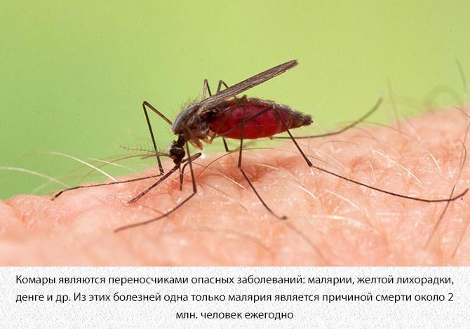 Опасность укуса комаров