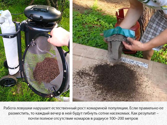 Результат работы уничтожителя комаров