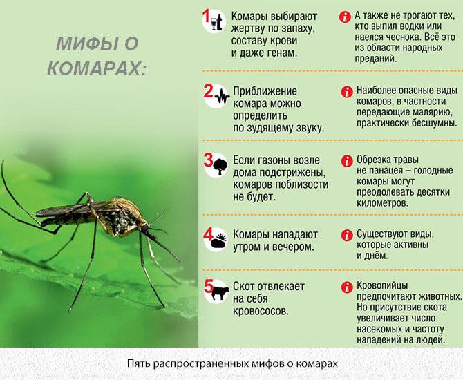 5 мифов о комарах