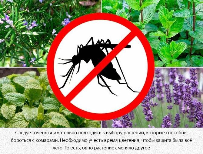 Растения против комаров