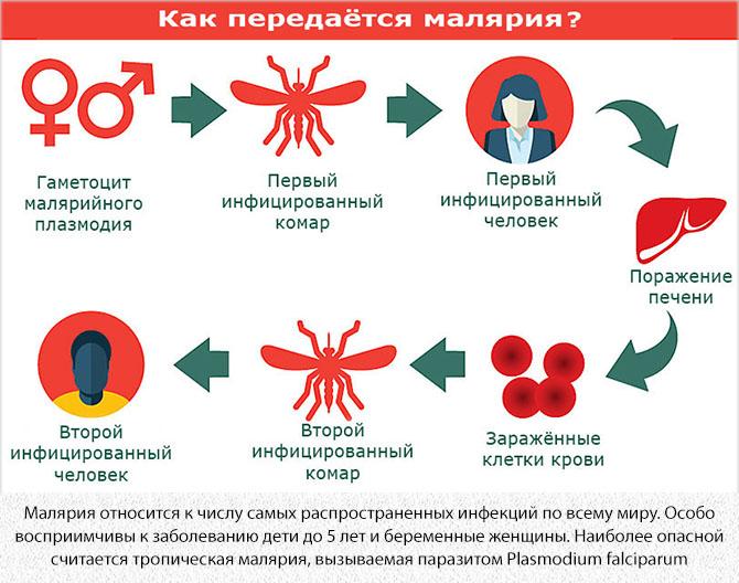 Заражение малярией от комаров