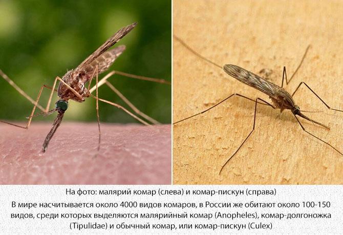 Малярийный комар и обычный