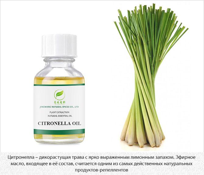 Цитронелла и эфирное масло из растения